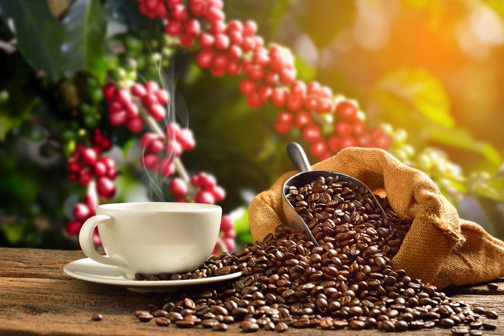 コーヒー豆の種類と特徴。味や香りはどう違う?