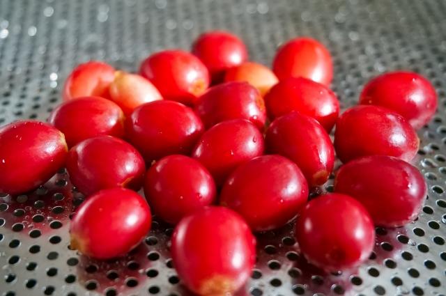 「コーヒーチェリー」とは?市販のコーヒー豆と「生豆」の違い
